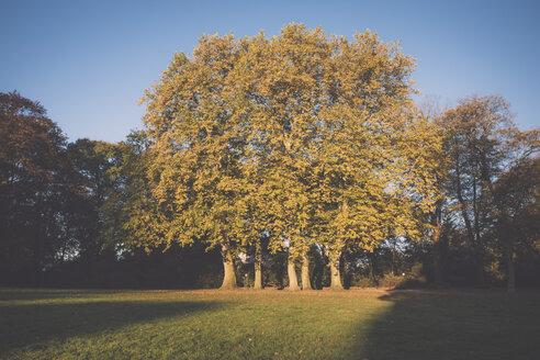 Germany, Hamburg, Jenischpark, Trees in autumn - MSF003765