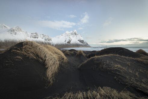 Iceland, Black sandy beach of Stokksnes - STCF000027