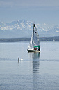 Germany, Bavaria, Stegen, Lake Ammer,  Sailing boat and a swan, Alps in the background - RD001262