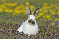 Baby rabbit sitting on flower meadow - RUEF001233