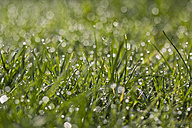 Meadow with dewdrops - MELF000008