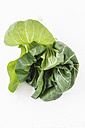 Chinese cabbage on white ground, view from above - EVGF000531