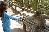 France, Alsace, Kintzheim, La Montagne des Singes, little girl feeding barbary macaque (Macaca sylvanus) - DHL000416