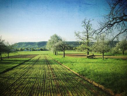 Germany, Baden-Wuerttemberg, Tuebingen, flowering apple trees - LVF001118