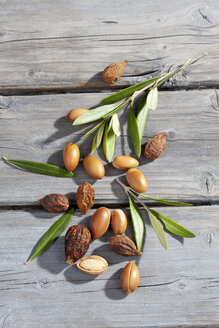 Argan nuts and leaves from Argan tree, Argania spinosa - CSF021284