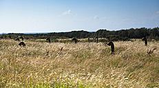 Germany, Mecklenburg-Western Pomerania, Ruegen, ventilation pipes on meadow - FCF000069