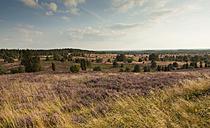 Germany, Lower Saxony, Lueneburg Heath - FCF000084