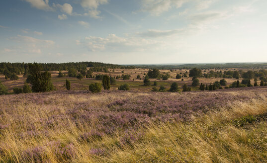 Germany, Lower Saxony, Lueneburg Heath - FCF000084