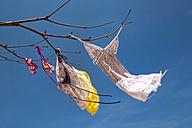 Asia, Thailand, Bangkok, swimwear hanging on boughs - RDF001290