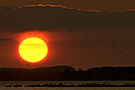 Germany, Schleswig-Holstein, Sunset and flight of birds - HACF000083