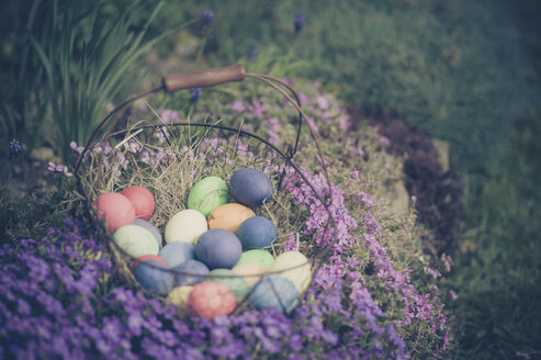 Easter basket in garden - MJF000971
