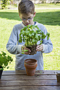 Boy repotting basil on wooden table - LVF001144