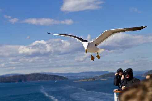 Scandinavia, Norway, Oslo, Seagull, Larus, flying nearby ship - JFE000401