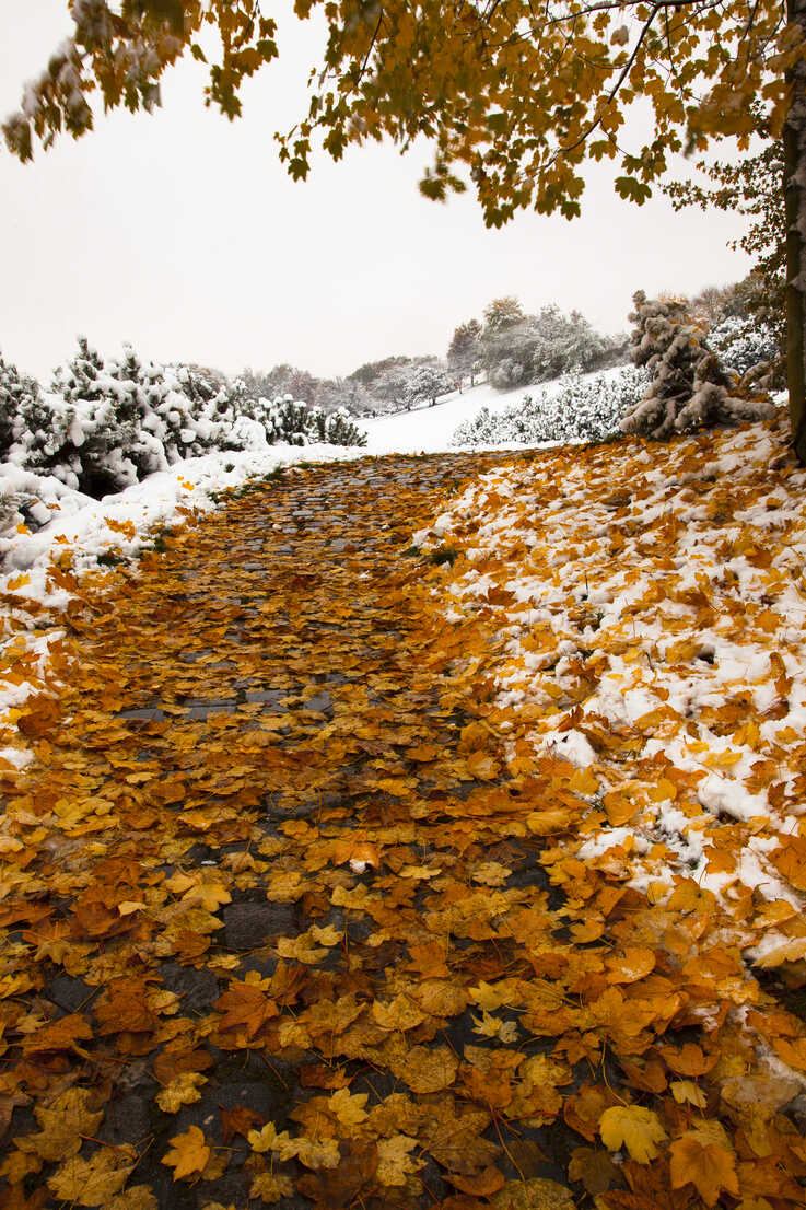 Germany, Bavaria, Path in Olympia Park in winter - FCF000123 - Christina Falkenberg/Westend61