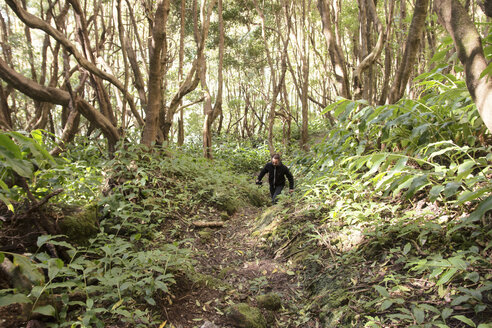 Portugal, Azores,Sao Miguel, Man hiking in forest - ONF000469