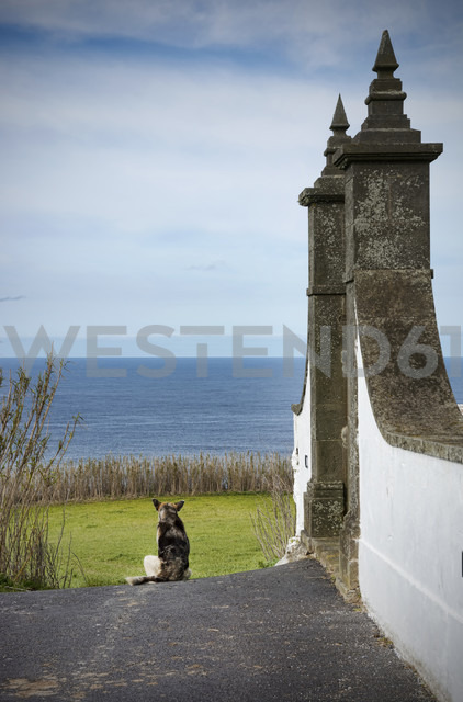 Portugal, Azores,Sao Miguel, Dog sitting in street - ONF000484 - noonland/Westend61