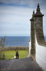 Portugal, Azores,Sao Miguel, Dog sitting in street - ONF000484