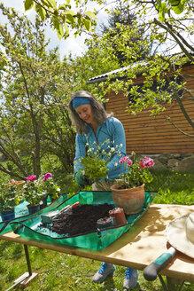 Mature woman gardening - AKF000392