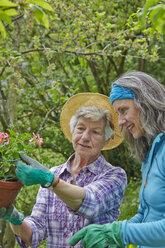 Senior mother and daughter gardening - AKF000384