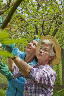 Senior mother and daughter pruning tree - AKF000382