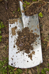 Spade with soil and earthworm - AKF000376