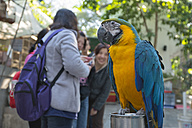 China, Hong Kong, Blue-and-yellow Macaw at the Yuen Po Street bird market in downtown Kowloon - SH001252