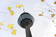 Germany, North Rhine-Westphalia, Duesseldorf, Rhine Tower and autumn leaves, view from below - MIZ000447