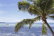 Oceania, Fiji Islands, Palm, Pacific Ocean and boat - STDF000069