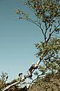 Two boys climbing on tree - HHF004803