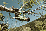 Boy hanging on branch of a tree - HHF004799