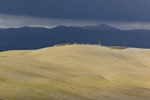 Italy, Tuscany, Province of Siena, Crete Senesi, Landscape - KLRF000054
