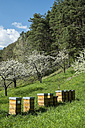 Germany, Baden-Wuerttemberg, Constance District, Beehives on meadow with scattered fruit trees, Apple trees, Malus - ELF000961