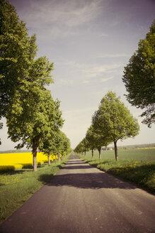 Germany, Baden-Wuerttemberg, Einsiedel near Tuebingen, Avenue in spring - LVF001238