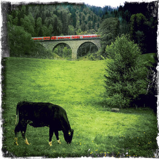 Landscape with cows in the background the railway bridge in the gullies, Breisgau in the Black Forest, Germany - DR000687