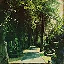 Germany, Hamburg, Wandsbek, Hinschenfelder cemetery - MMO000074