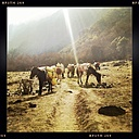 Nepal, Langtang Region, ass on the way - MMO000263