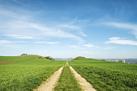 Germany, Baden Wuerttemberg, Hegau landscape, Field path to Maegdeberg - ELF000985