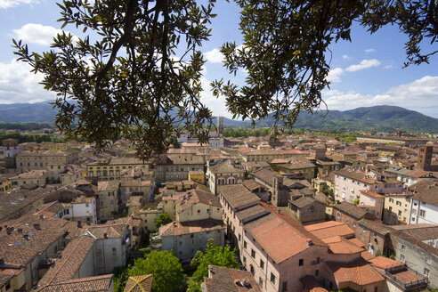 Italy, Tuscany, Province of Lucca, Lucca, View from Torre Guinigi to Cathedral - YFF000138