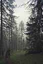 Austria, Tyrol, Kals am Grossglockner, forest - MKLF000010