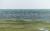 Namibia, Walvis Bay, Group of flamingoes in lagoon - HLF000512