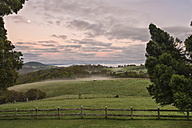 Australia, New South Wales, Dorrigo,  meadows in Dorrigo National Park at dawn - SHF001292