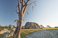 Australia, New South Wales, Arding, dead wood and boulders in the morning sun - SH001312