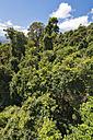 Australia, New South Wales, Dorrigo, rainforest canopy from the skywalk in the Dorrigo National Park - SHF001326