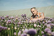 Germany, Hesse, Lampertheim, farmer harvesting chives, Allium schoenoprasum - UUF000533