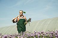 Germany, Hesse, Lampertheim, senior farmer harvesting chives, Allium schoenoprasum - UUF000591