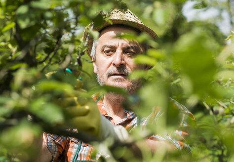 Germany, Hesse, Lampertheim, portrait of senior gardener at work - UUF000581