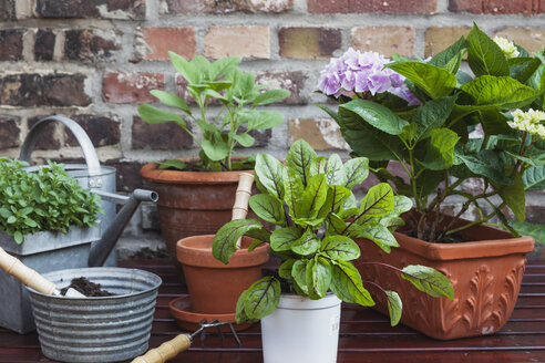 Germany, Plants for the balcony - GWF002780