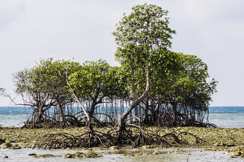 Indonesia, Riau Islands, Bintan, Nikoi Island, Mangroves - THAF000352