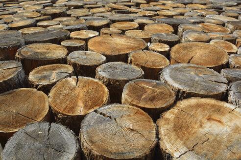 Germany, Bavaria, Sawed off tree trunks - AXF000671