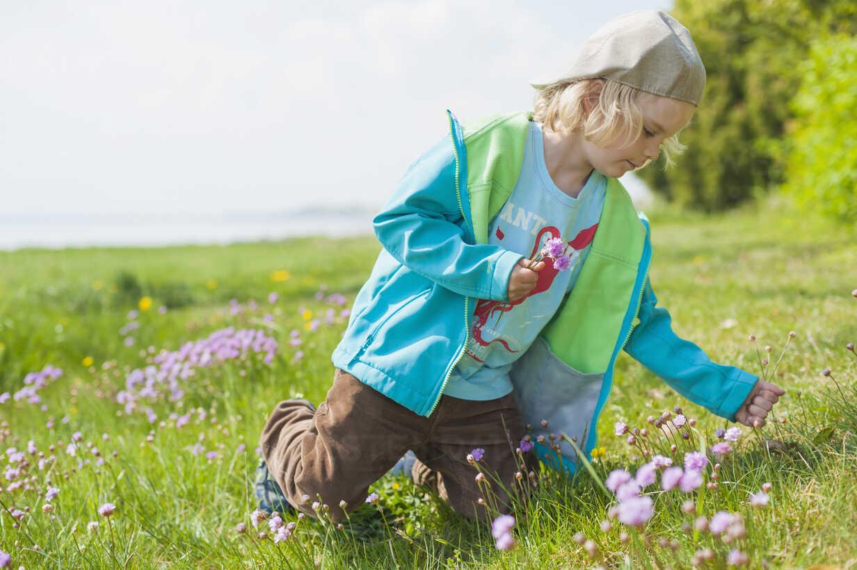 Germany, Mecklenburg-Western Pomerania, Ruegen, Boy picking flowers from meadow - MJF001197 - Jana Mänz/Westend61